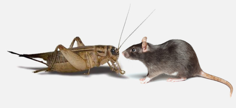 critter-food