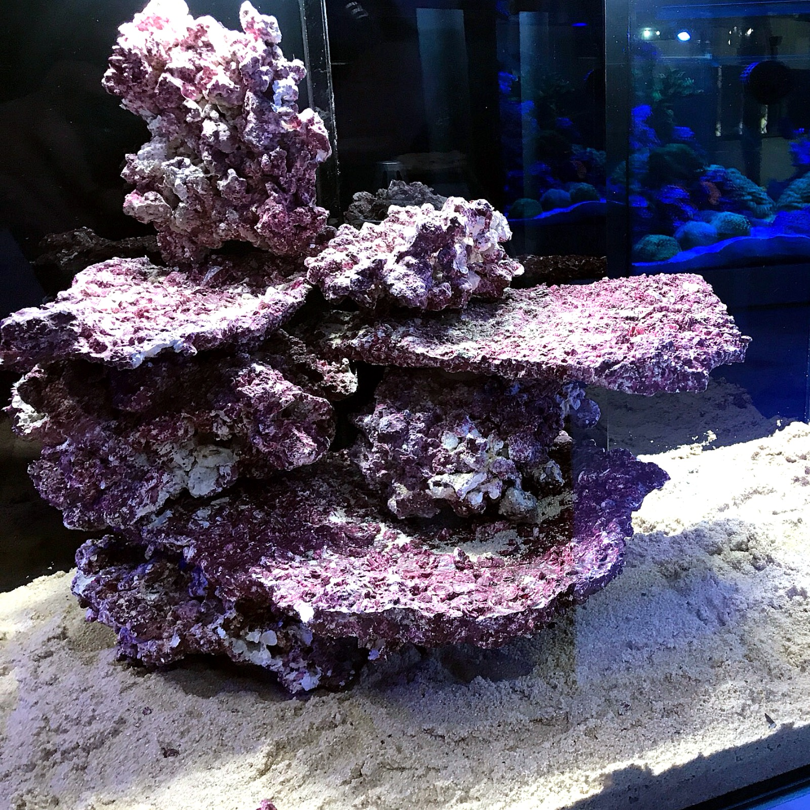 Real Reef Rock-Branch Rock per kg – Aquarium Store ...