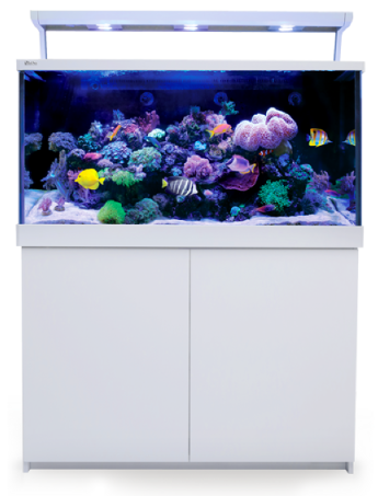 Shop online for all your aquarium supples
