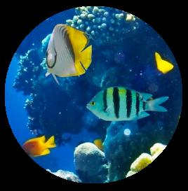 Bunarong Aquarium Store